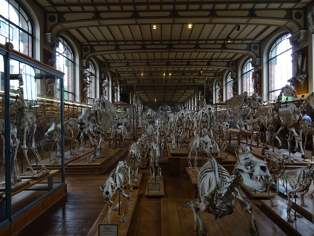 Palaeontology-Museum-Paris-SDS